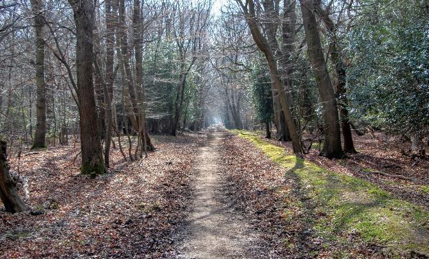 Walau Menyeramkan, Hutan Ini Bikin Penasaran Buat Dikunjungi!