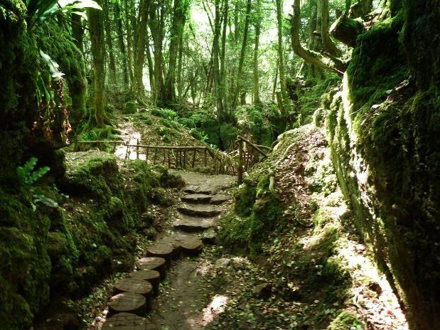 Puzzlewood, Hutan Indah yang Mengilhami Tolkien Bikin Lord of The Rings!