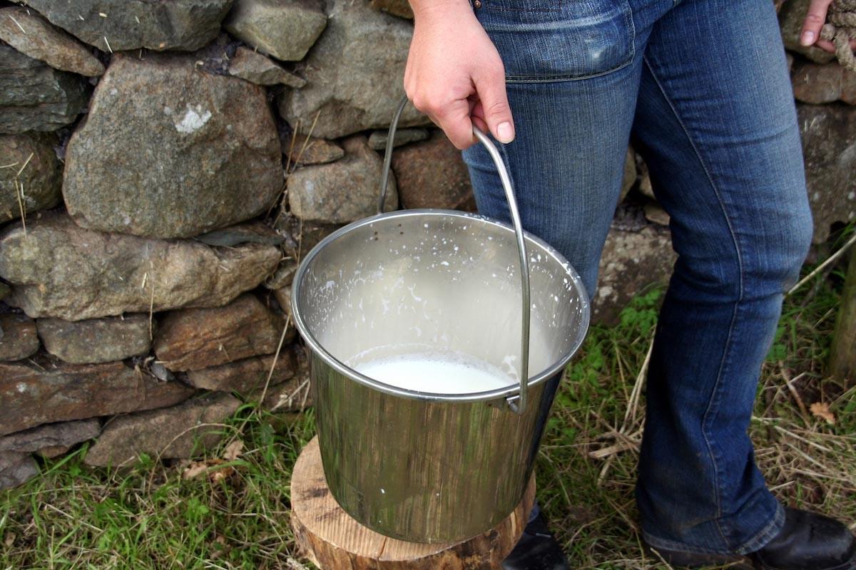 Susu Mentah, Apa Saja Bahayanya?
