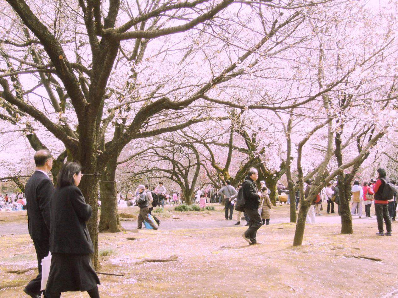 Milk Lovers, Ini Alasan Kenapa April Jadi Waktu Terbaik Main ke Jepang