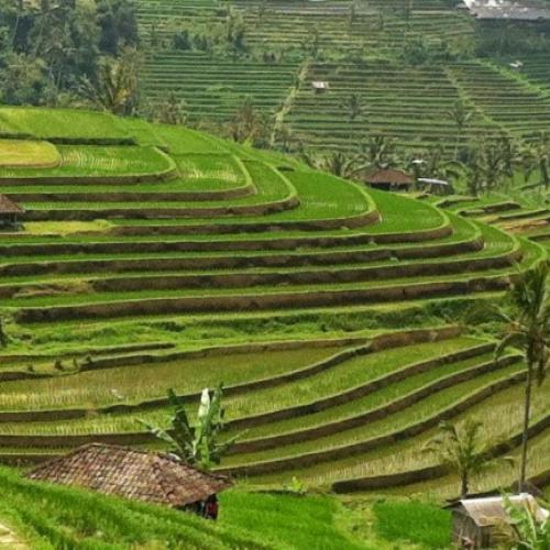 Hebat! Ubud Raih Predikat Kota Terbaik Nomor 2 di Asia