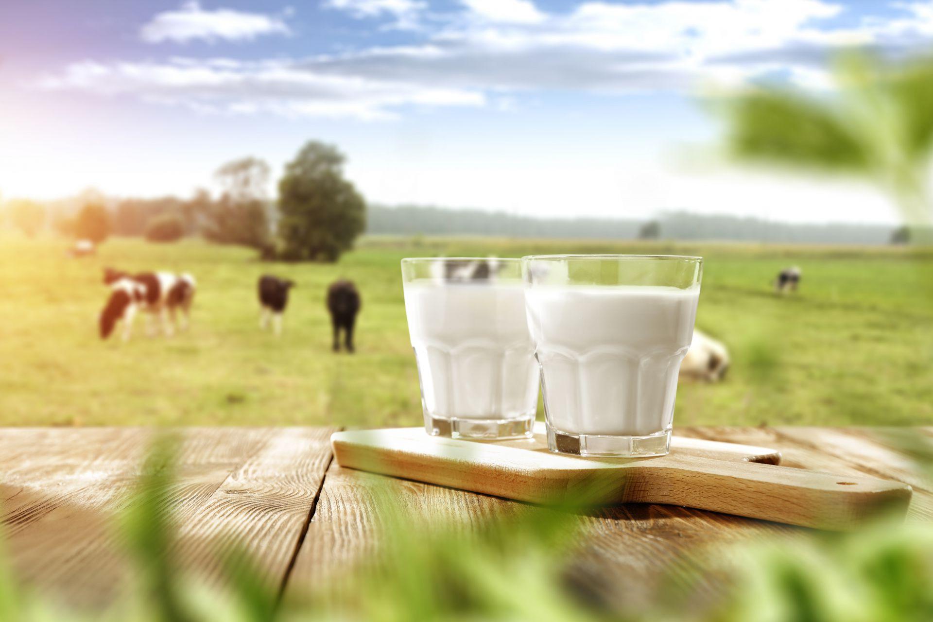 Perbedaan Susu UHT dengan Susu Pasteurisasi